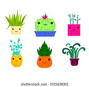Cute smolong house plants in pots
