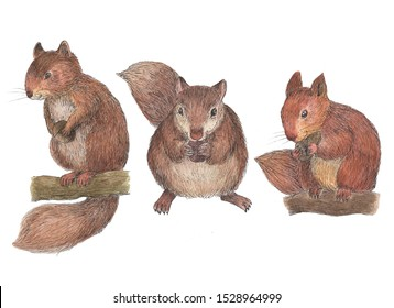 cute squirrel illustration with watercolor