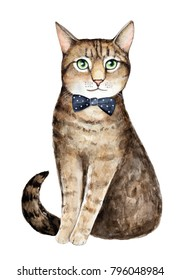 Cute tabby cat wearing black bow tie. Sitting pose, green round curious eyes, flirty tail. Happy, glad, pleased, joyful emotions. Hand drawn watercolour illustration on white background, cut out.