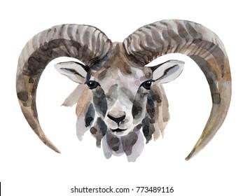 cute watercolor goat