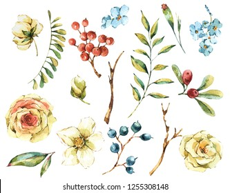 Cute watercolor natural floral set of white rose, wildflowers, berries, leaves, isolated vintage design elements, hand painted collection