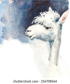 Cute White Llama Watercolor Illustration Sketch Hand Drawn