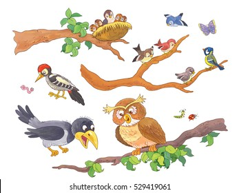 Cute woodland animals. Forest birds sitting on branches. Cute owl, woodpecker, crow, sparrows,nightingale.  Coloring book. Coloring page. Funny cartoon characters isolated on white background.