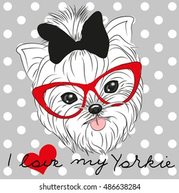 Cute Yorkshire Terrier on a dots background