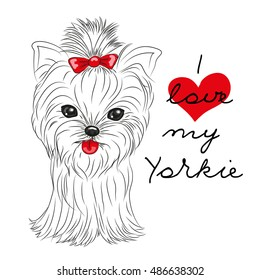 Cute Yorkshire Terrier on a white background