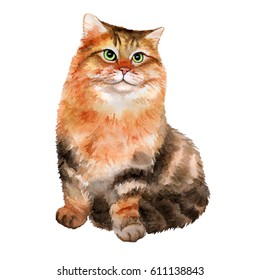 Cute young Siberian cat on white background. Watercolor. Illustration
