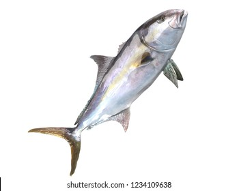 Cutout transparent side view  image of greater amberjack fish 3d Render