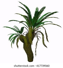 Cycad Seed Plant 3D Illustration - Cycads are seed plants with a long fossil history that were formerly more abundant and more diverse than they are today.