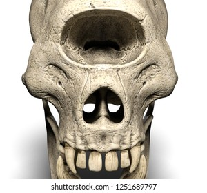 Cyclop skull with white background