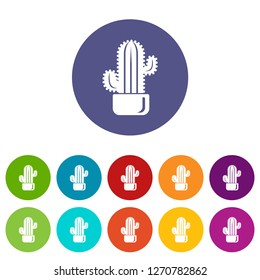 Cylindrical cactus icon. Simple illustration of cylindrical cactus icon for web
