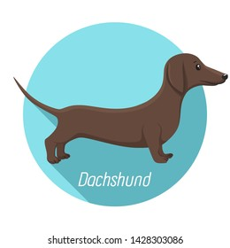 Dachshund dog animal vector icon. Characters brown long dog breed dachshund. Illustration pet puppy dog ​​dachshund.