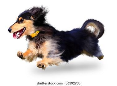 dachshund on a white background
