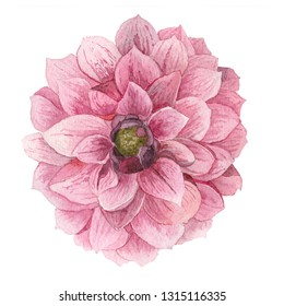 dahlia flower watercolor