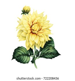Dahlia and leaves, watercolor, can be used as greeting card, invitation card for wedding, birthday and other holiday and  summer background