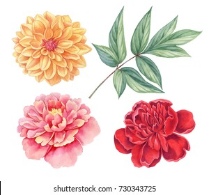 Dahlia and peony. Floral set of pink, red, yellow vintage flowers green leaves  isolated on white background. Watercolor botany illustration.