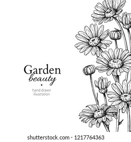 Daisy flower border drawing. hand drawn engraved floral frame. Chamomile black ink sketch. Wild botanical garden bloom. Great for tea packaging, label, icon, greeting cards, decor