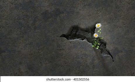 Daisy growing in Cracked Wall. Growing in a seemingly barren environment this tiny daisy demonstrates tenacity, life & hope. 3d Rendering