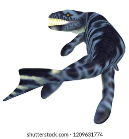 Dakosaurus Marine Reptile Tail 3D illustration - Dakosaurus was a marine carnivorous reptile that lived in the seas of Europe, Mexico and Argentina during the Jurassic and Cretaceous Periods.