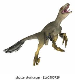 Dakotaraptor Dinosaur on White 3D illustration - Dakotaraptor was a carnivorous dromaeosaurid theropod dinosaur that lived in South Dakota, North America during the Cretaceous Period.