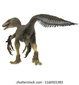 Dakotaraptor Dinosaur Tail 3D illustration - Dakotaraptor was a carnivorous dromaeosaurid theropod dinosaur that lived in South Dakota, North America during the Cretaceous Period.