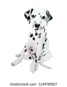 Dalmatian watercolor illustration