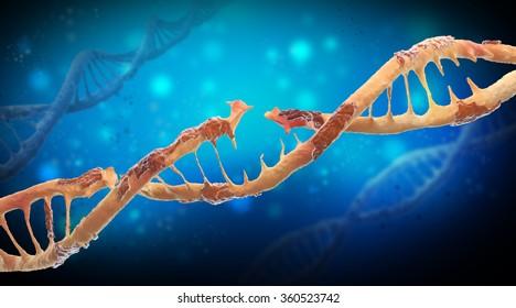 Damaged DNA