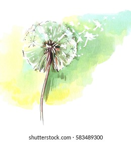 Dandelion flower, blowing seeds, sunlight background. Watercolor illustration