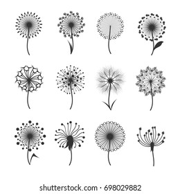 Dandelion flowers with fluffy seeds black floral silhouettes isolated on white. Blowball fragile and illustration of black blowball fluffy