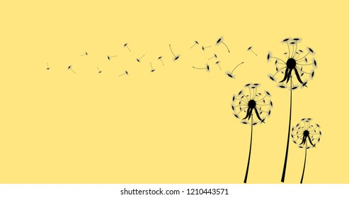 Dandelion flowers on wind loses background.