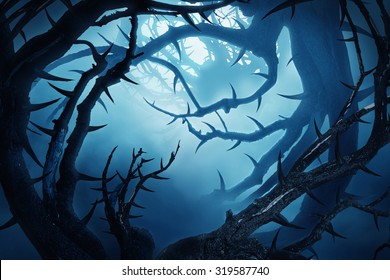 dark forest with thorny bushes at night