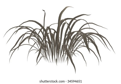 Dark grey dead grass on a white background