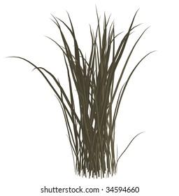 Dark grey dead grass on a white background