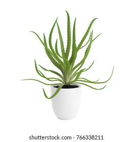 Decorative aloe planted in pot, isolated on white background. 3D Rendering, Illustration.