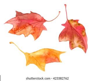 Decorative autumn maple leaves. Watercolor