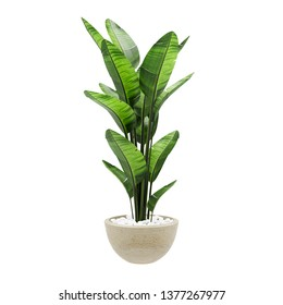 Decorative banana plant in stone marble vase isolated on white background. 3D Rendering, Illustration.