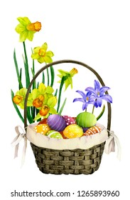 Decorative basket with colorful decorated eggs, daffodils (yellow narcissi) and bluebells in the background hand drawn in watercolor isolated on a white background. Wonderful Easter arrangement