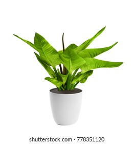 Decorative Bird nest fern tropical tree planted ceramic pot isolated on white background. 3D Rendering, Illustration.