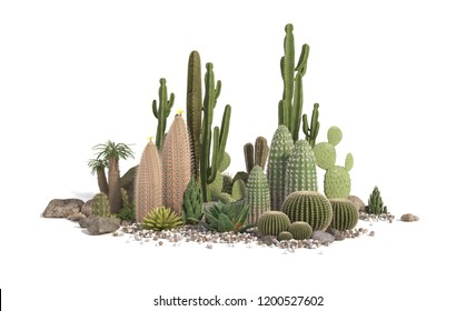 Decorative composition composed of groups of different species of cacti, aloe and succulent plants isolated on white background. 3D rendering.