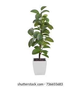 Decorative Ficus Elastica tree isolated on white background. 3D Rendering, Illustration.