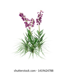Decorative Fireweed, loosestrife plant isolated on white background. 3D Rendering, Illustration.