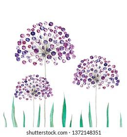 Decorative flowers pattern. Allium. Alliaceae.