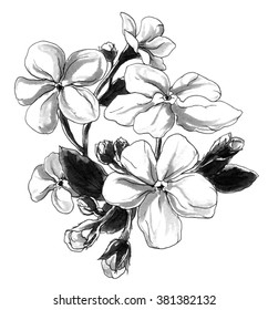 Decorative Forget me not spring flowers in bouquet. Botanical hand drawn watercolor black and white monochrome illustration for greeting cards, invitations, printing isolated on white background