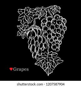 Decorative  grapes, design elements. Can be used for cards, invitations, banners, posters, print design. Floral background in line art style