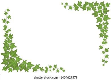 Decorative green ivy wall climbing plant frame. Foliage decoration wall, branch frame green leaf illustration