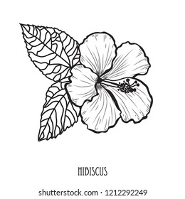 Decorative hibiscus  flower, design element. Can be used for cards, invitations, banners, posters, print design. Floral background in line art style