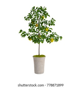 Decorative lemon tree planted ceramic pot isolated on white background. 3D Rendering, Illustration.