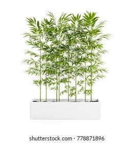 Decorative plant planted white ceramic pot isolated on white background. 3D Rendering, Illustration.