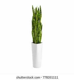 Decorative  Snake Plant planted white ceramic pot isolated on white background. 3D Rendering, Illustration.