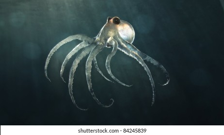 deep sea octopod