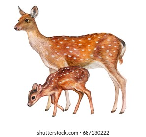 Deer female with baby isolated on white background. Fawn. Motherhood. Watercolor. Illustration. Picture. Image